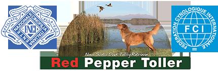 redpeppertoller.com
